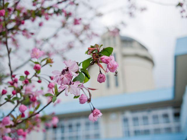 哲学堂 みずの塔と桜
