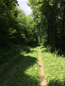 Keyser Run Trail