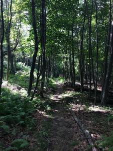 Applachian Trail (AT): Marshall Summit