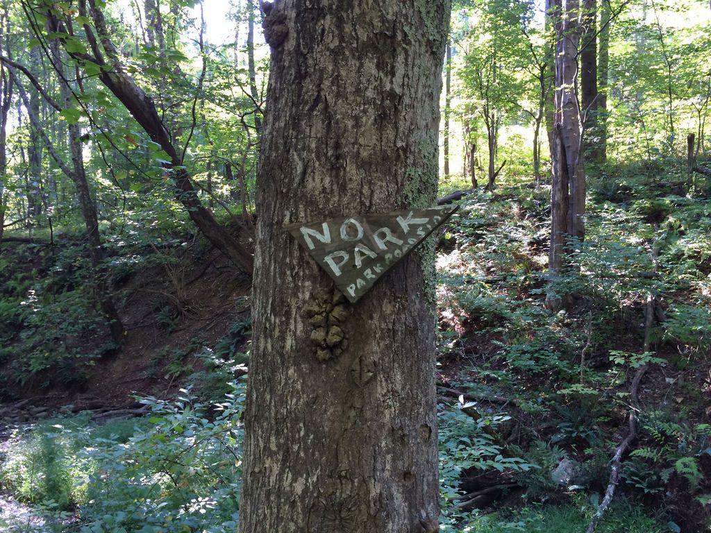 Shenandoah: Pine Hill Gap – Broad Hollow Loop