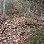 GWNF: Strikler Knob Trail