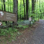 Shenandoah: Robertson Mountain Trail