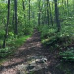 GWNF: Big Schloss Mountain Trail