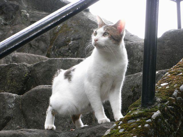 伊豆山神社の階段のネコ