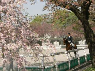 馬事公苑 馬と枝垂れ桜