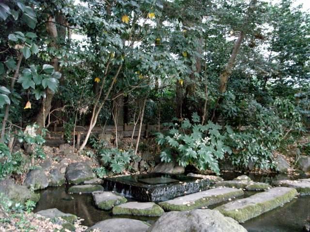 神田川の源泉