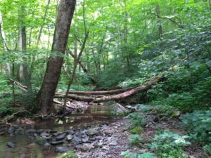 Shenandoah: Jeremy Run Trail
